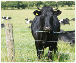 CATTLE FENCING PANELS FOR SALE | FENCE PANEL SUPPLIERS
